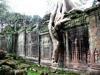 Preah khan hanging tree